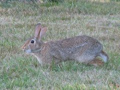 Rabbit survival group - 3912496591 82123885ec m rabbit - Loner's guide to joining a survival group